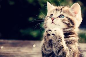 Фотоэффект - Милый котенок